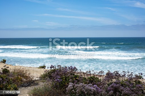 Coastal landscape view of Sea Lavender, sand and water in Del Mar, San Diego,California