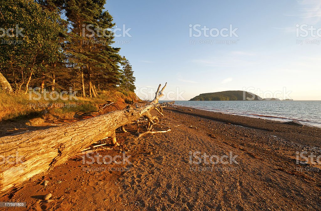 Coastal Log at Sunset royalty-free stock photo
