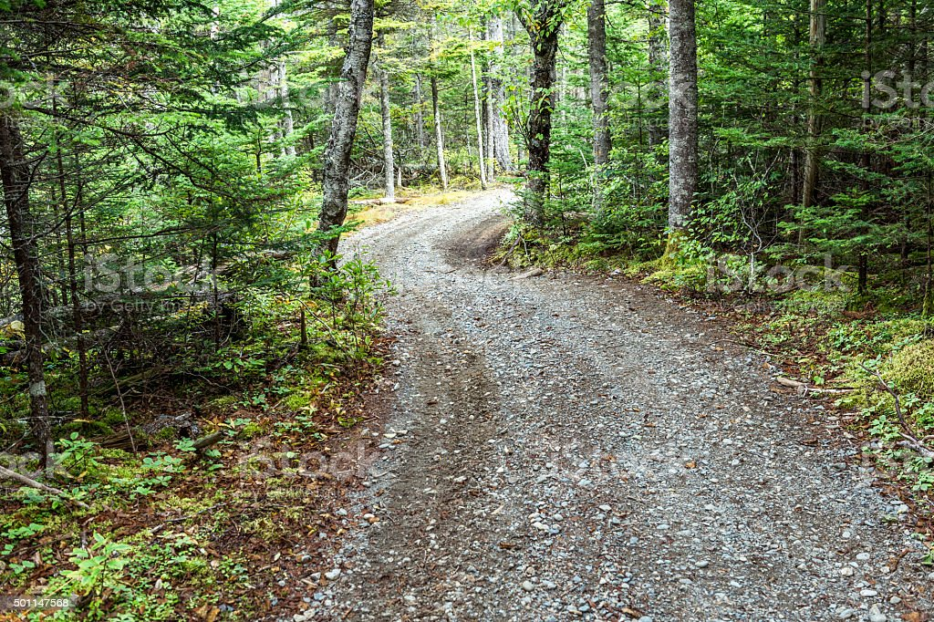 Coastal Maine Rural Gravel Path Road Forest Trees on Sides stock photo