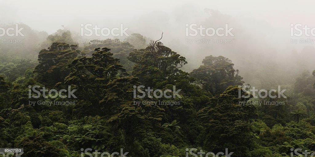 Coastal New Zealand Rainforest stock photo