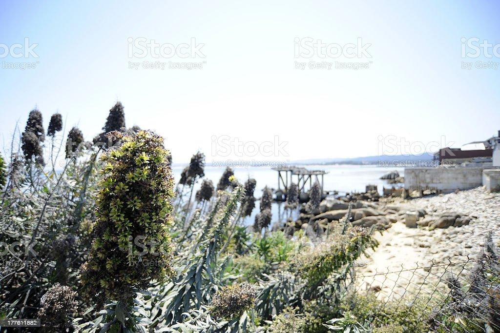 Coastal Scene Monterey California stock photo