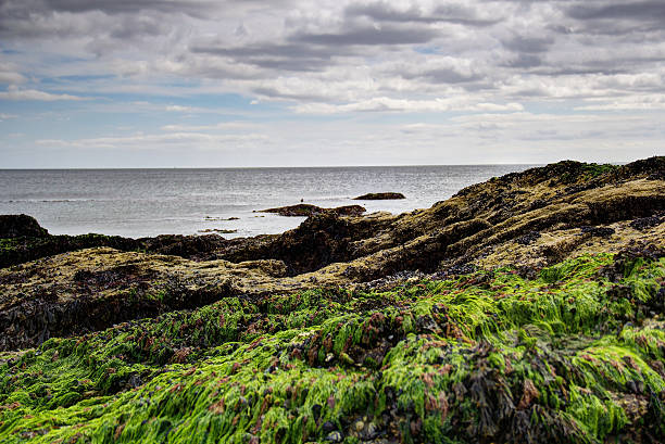 Coastal Shot HDR Detailed image stock photo