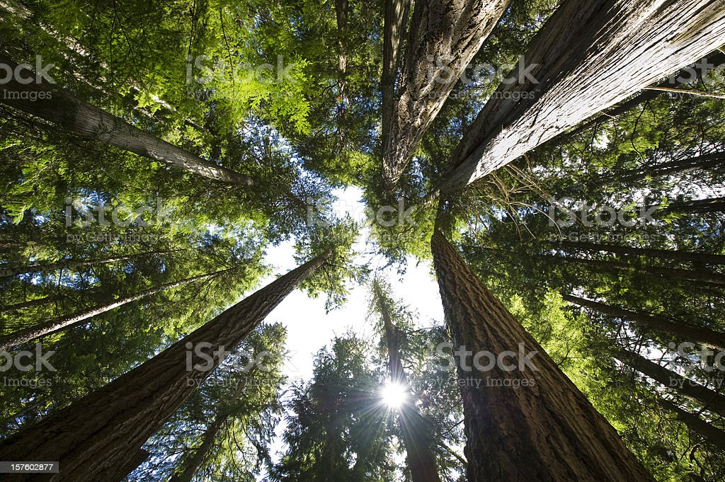Coastal Temperate Rain Forest stock photo