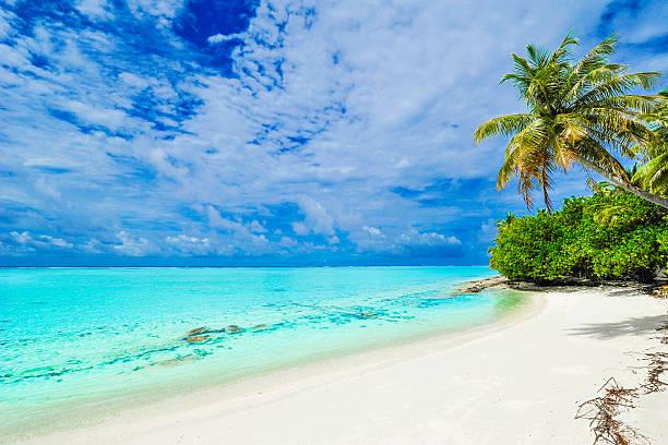 Tropisches Paradies – Foto