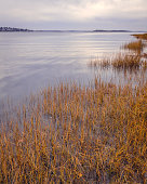 This is a photograph of coastal wetland grass in Massachusetts, New England.