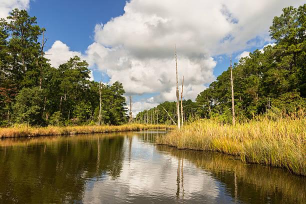 terras húmidas do litoral na carolina do norte - estuário imagens e fotografias de stock