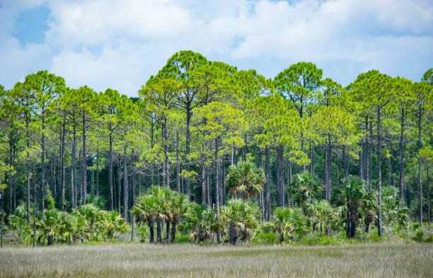 Coastal Wetlands in North Florida stock photo