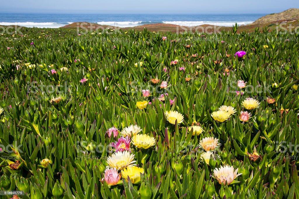 Coastal Wildflowers stock photo