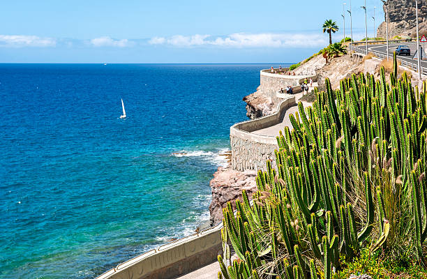 Costas de Puerto Rico para Amadores beach. Gran Canaria, caña - foto de stock