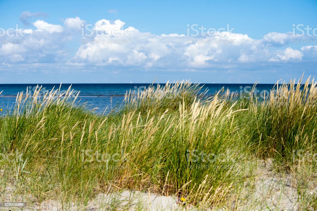 Coastline grass on Laesoe stock photo