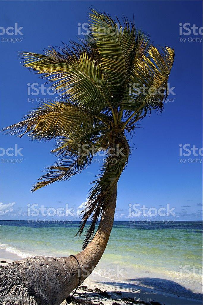 coastline in the caraibbien blue lagoon sian kaan mexico stock photo