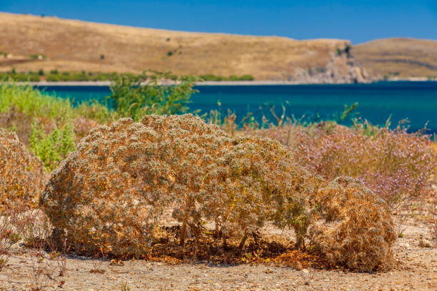 Coastline nature of Aegean islands - Lemnos - Greece stock photo