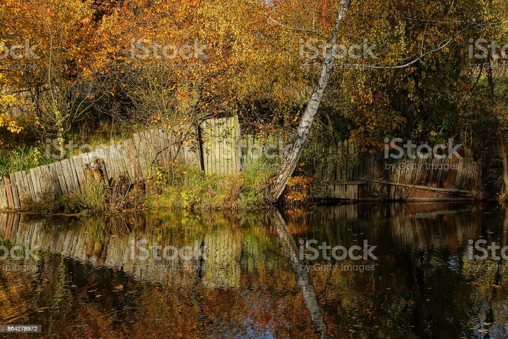 coastline near the lake with a yellow birch and an old fence royalty-free stock photo