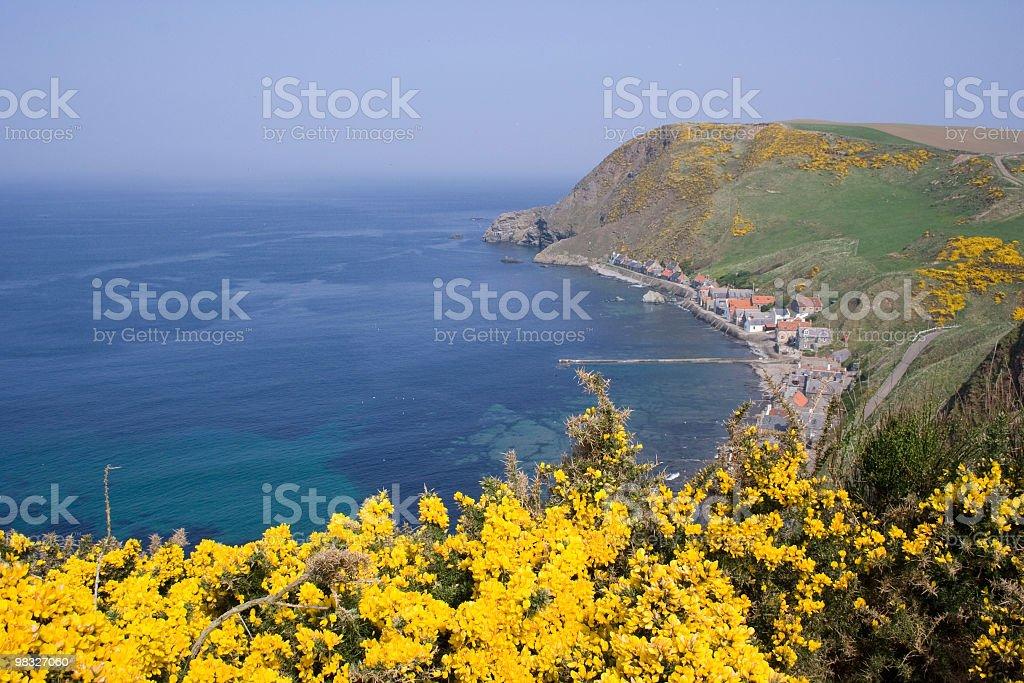 해안 마을, 절벽, 가시금작화 ~foreground (전경 royalty-free 스톡 사진