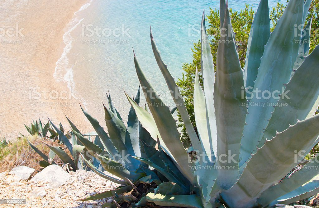 Coastline with exotic vegetation stock photo