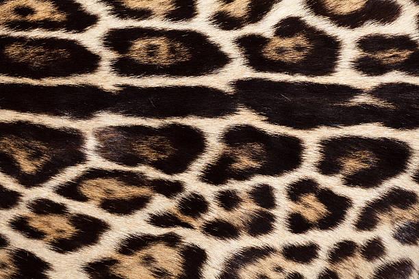 Coat of Serval, Medium-sized African Wild Cat stock photo