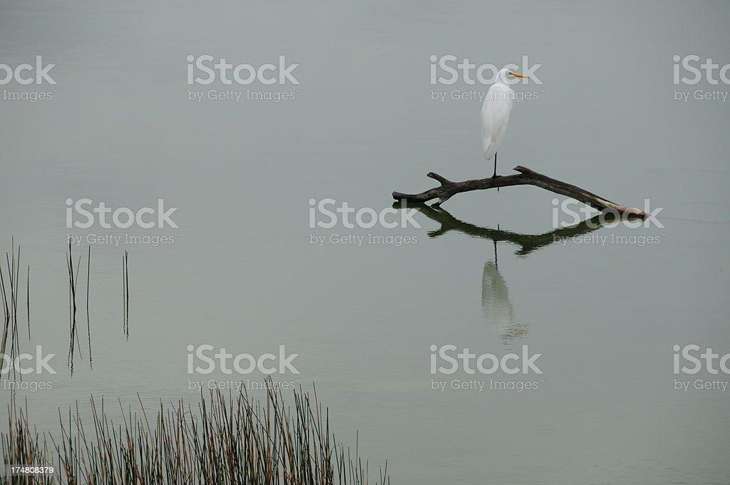 Coba lagoon, Mexico. stock photo
