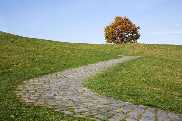 cobbledstone path s-curve and autumn tree stock photo