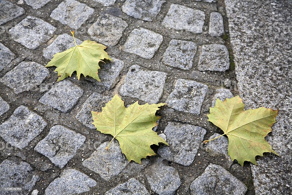 Cobblestones With Autumn Leaves royalty-free stock photo