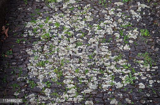 Old cobblestones with lichen outside a church i Funchal, the main city on the Portuguse island Madeira
