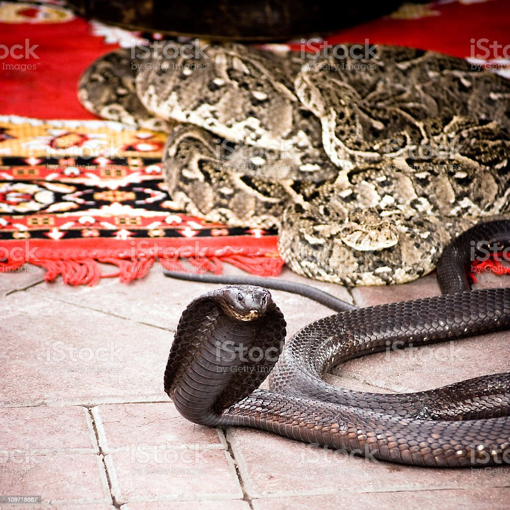Cobra and Python Snake on Carpet in Marrakech stock photo