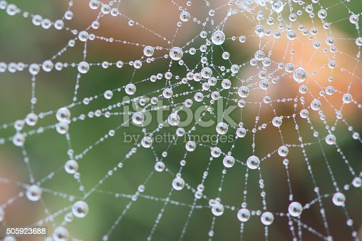 istock Cobweb covered in dew during heavy fog 505923688