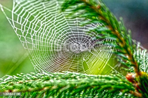 Cobweb in an English Garden covered in early morning dew in Autumn.