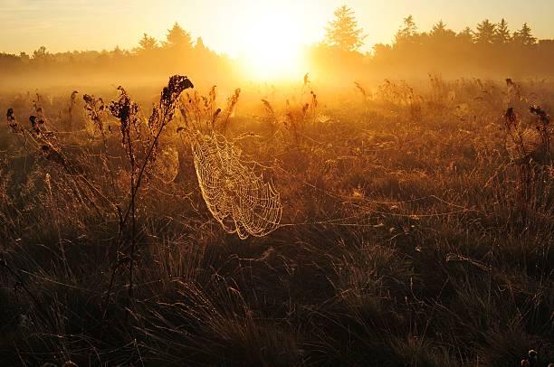 Cobweb in morning fog at sunrise stock photo