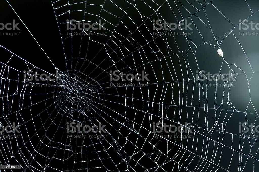Cobweb royalty-free stock photo