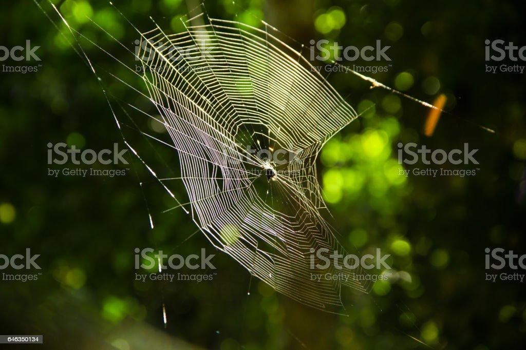 cobweb spyder stock photo