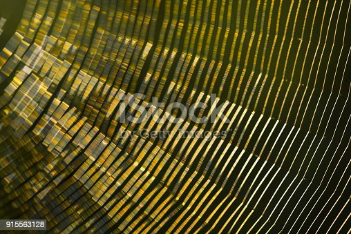 istock cobweb the light is reflected Beautiful colors 915563128