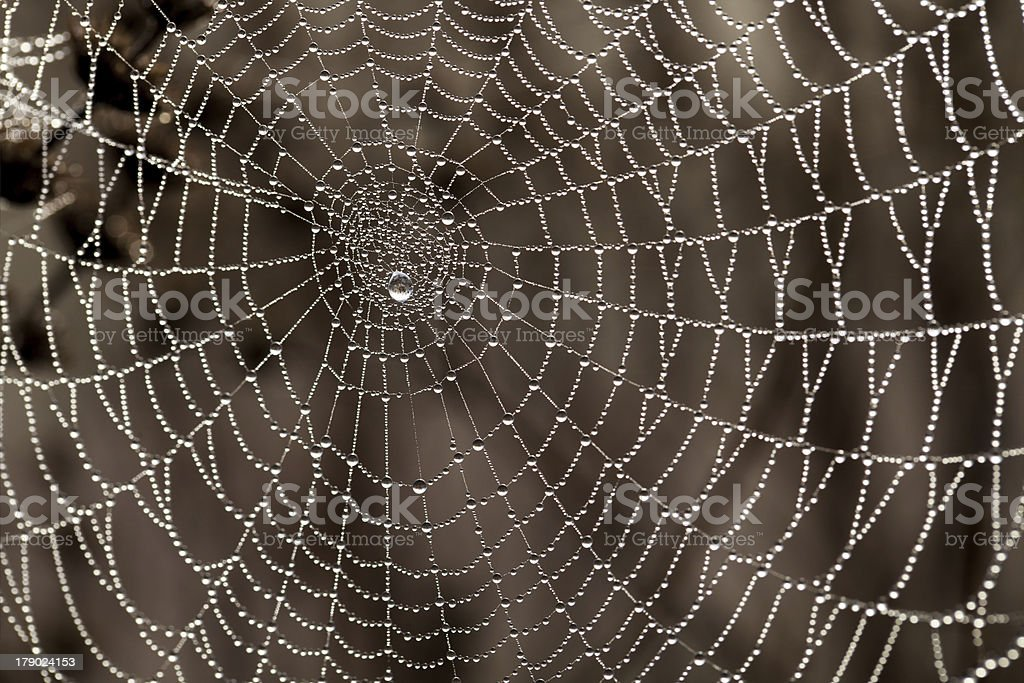 Cobweb with dew drops royalty-free stock photo