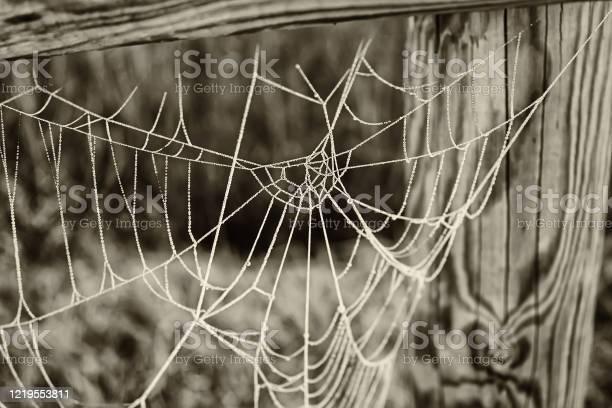 Photo of Cobweb with ice