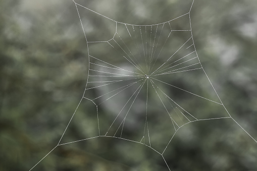 Cobweb with small dews during fog
