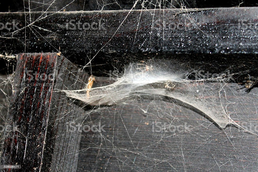 Cobwebs and Dead Spiders in timber wooden shed / outbuilding stock photo