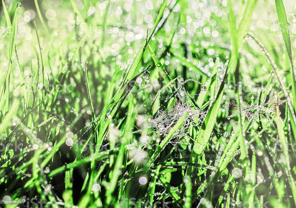 Cobwebs and dew in morning grass photo libre de droits