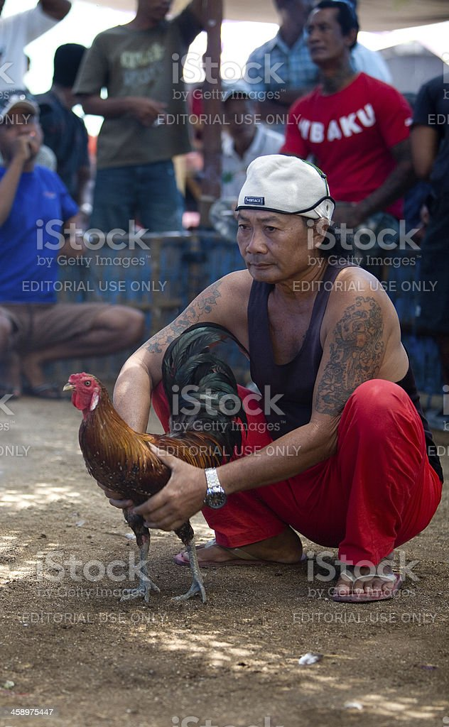 Cock fighting royalty-free stock photo