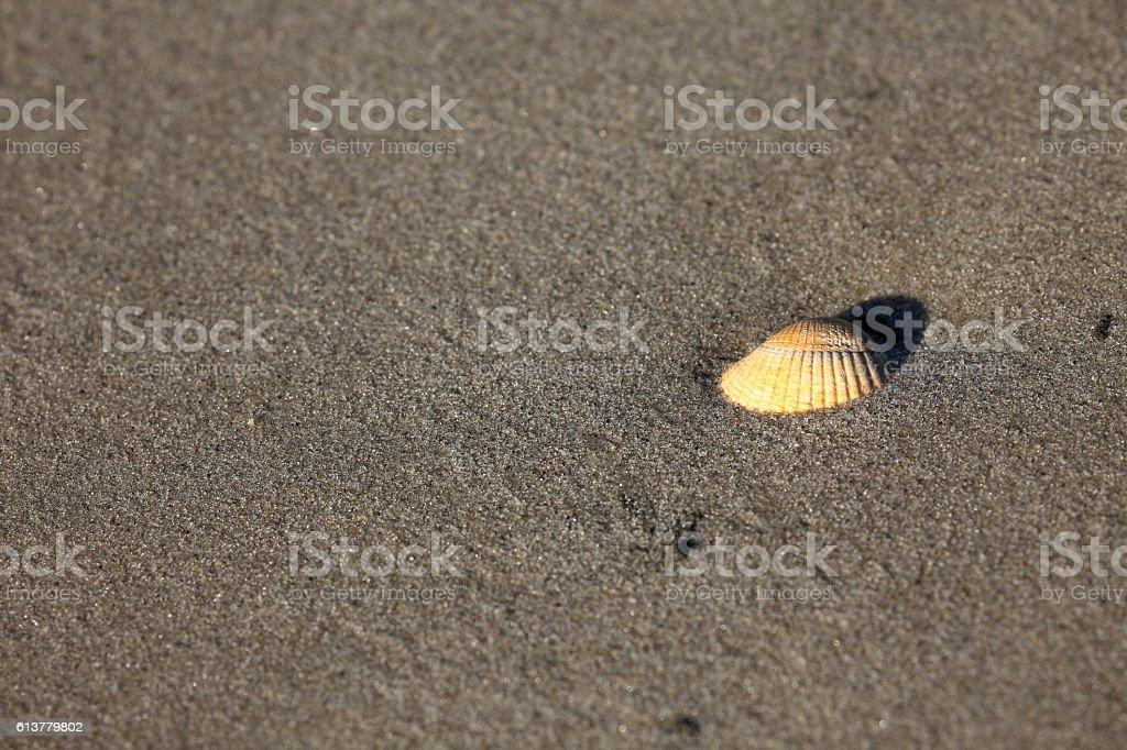 Cockle on the sandbank stock photo