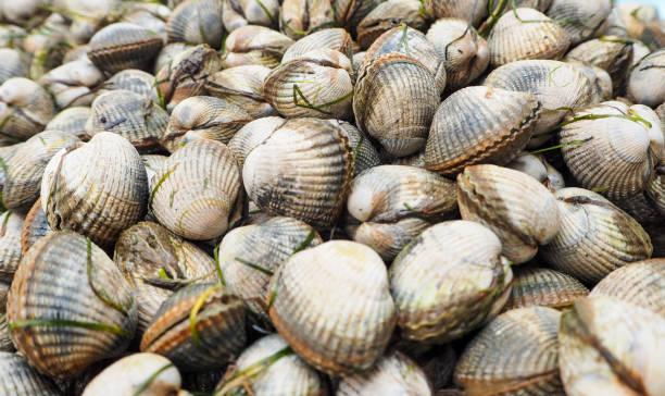 kokkels zeevruchten - schaaldier stockfoto's en -beelden