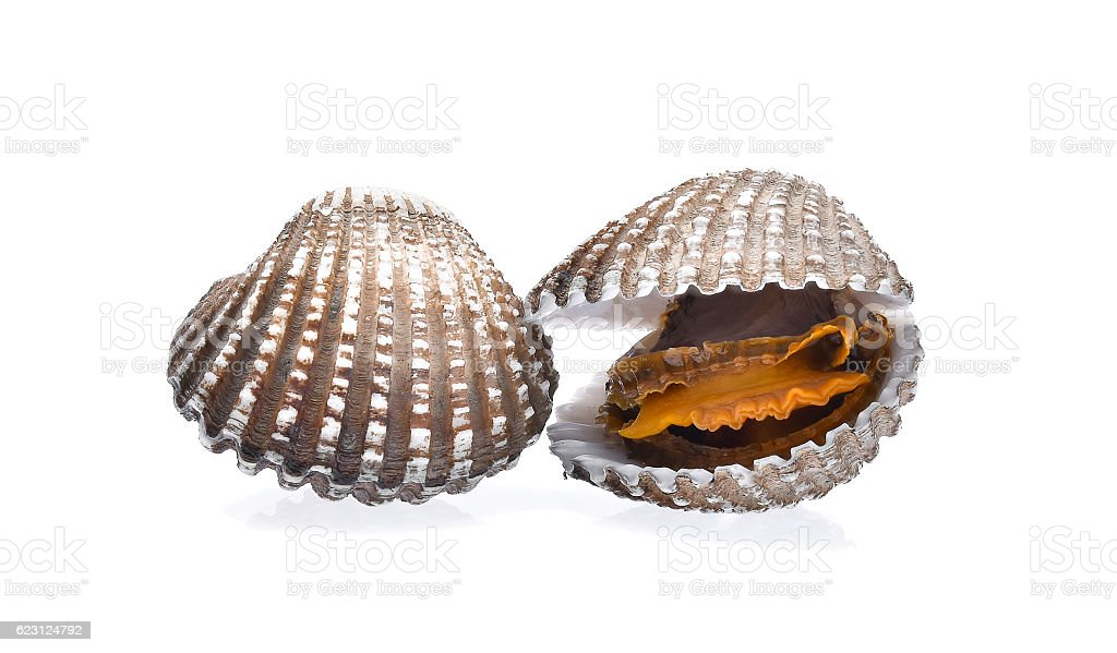 cockles seafood on white background - foto de stock