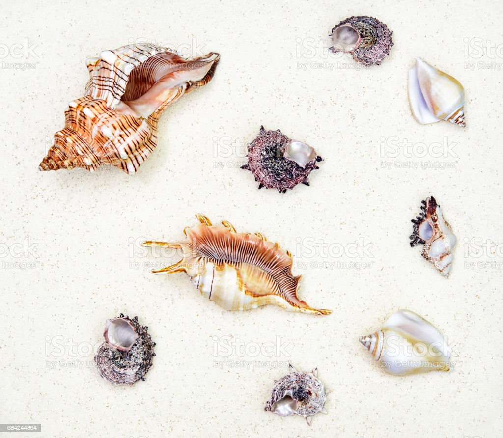 cockleshells are on white sand,  top view royalty-free stock photo
