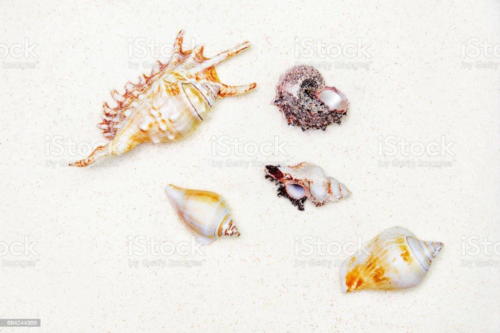 DafГјr sind auf weißem Sand, Ansicht von oben Lizenzfreies stock-foto