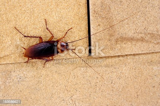 istock Cockroach crawling on a tile kitchen floor 153586621