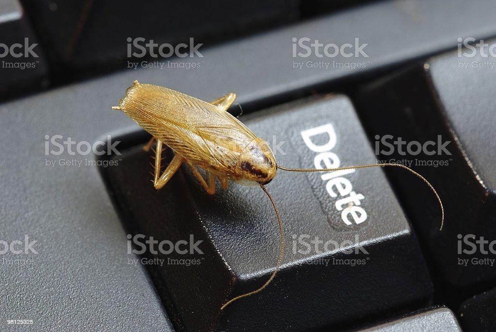 cockroach delete idea royalty-free stock photo