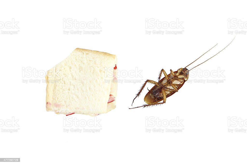Cockroach died after eating poison bread. royalty-free stock photo