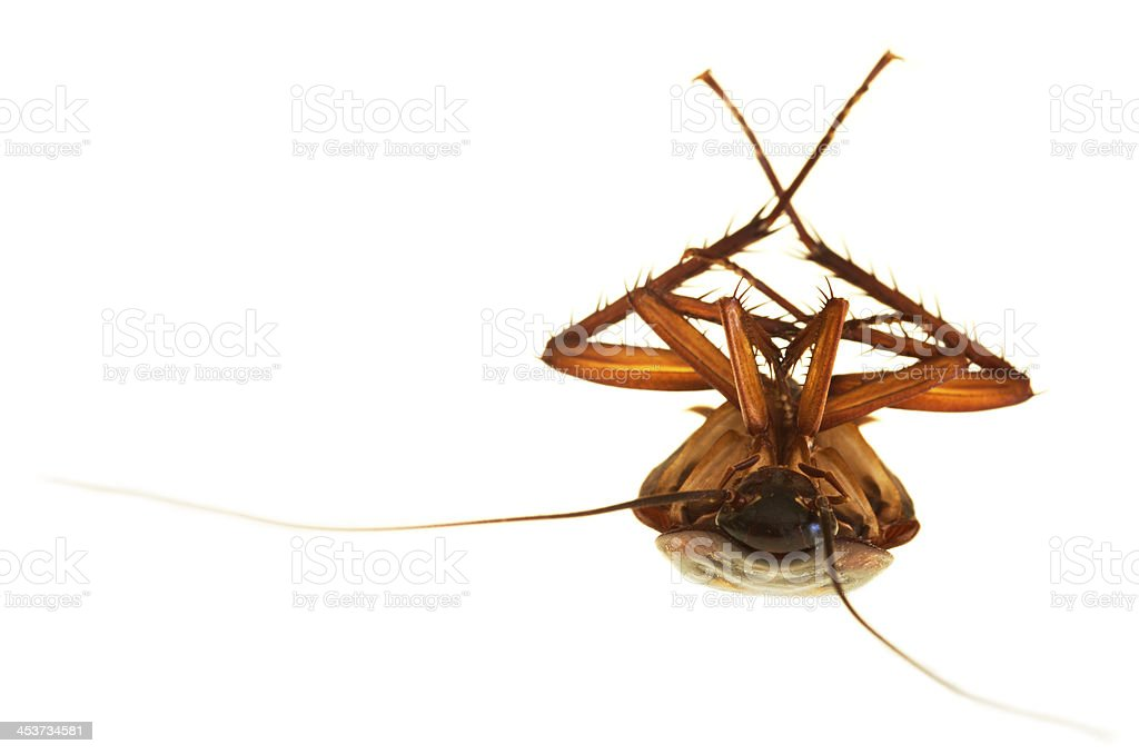 Cockroach frontal view stock photo