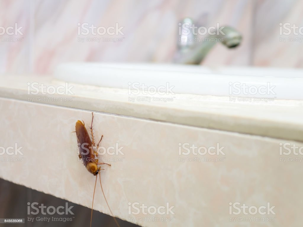 Cockroach in house on background of toilet stock photo