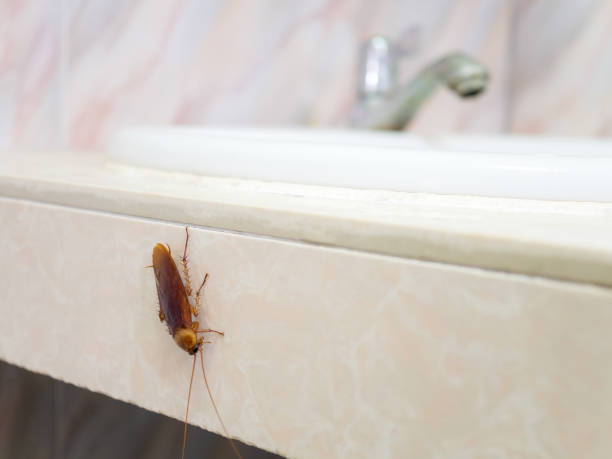 Cockroach in house on background of toilet Close-up image of cockroach in house on background of water closet. pest stock pictures, royalty-free photos & images