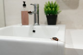 istock Cockroach in the bathroom on the sink. The problem with insects. 1267338758