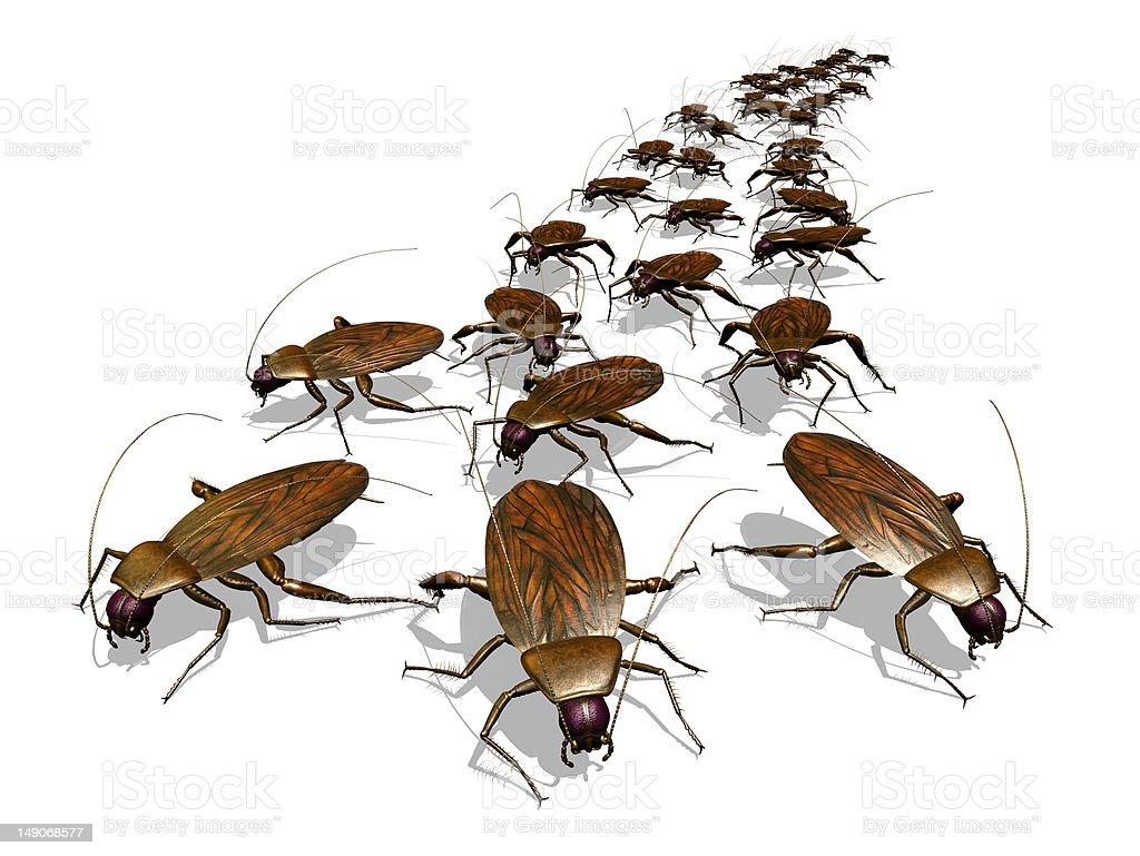 Cockroach Invasion stock photo